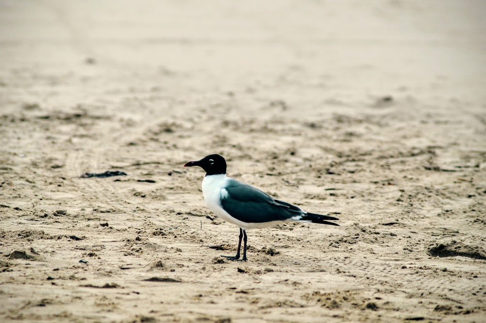 bird standing on sand during day