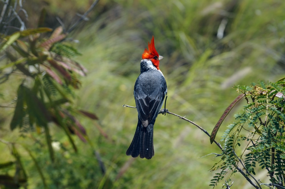 black and red bird perched on brown tree branch