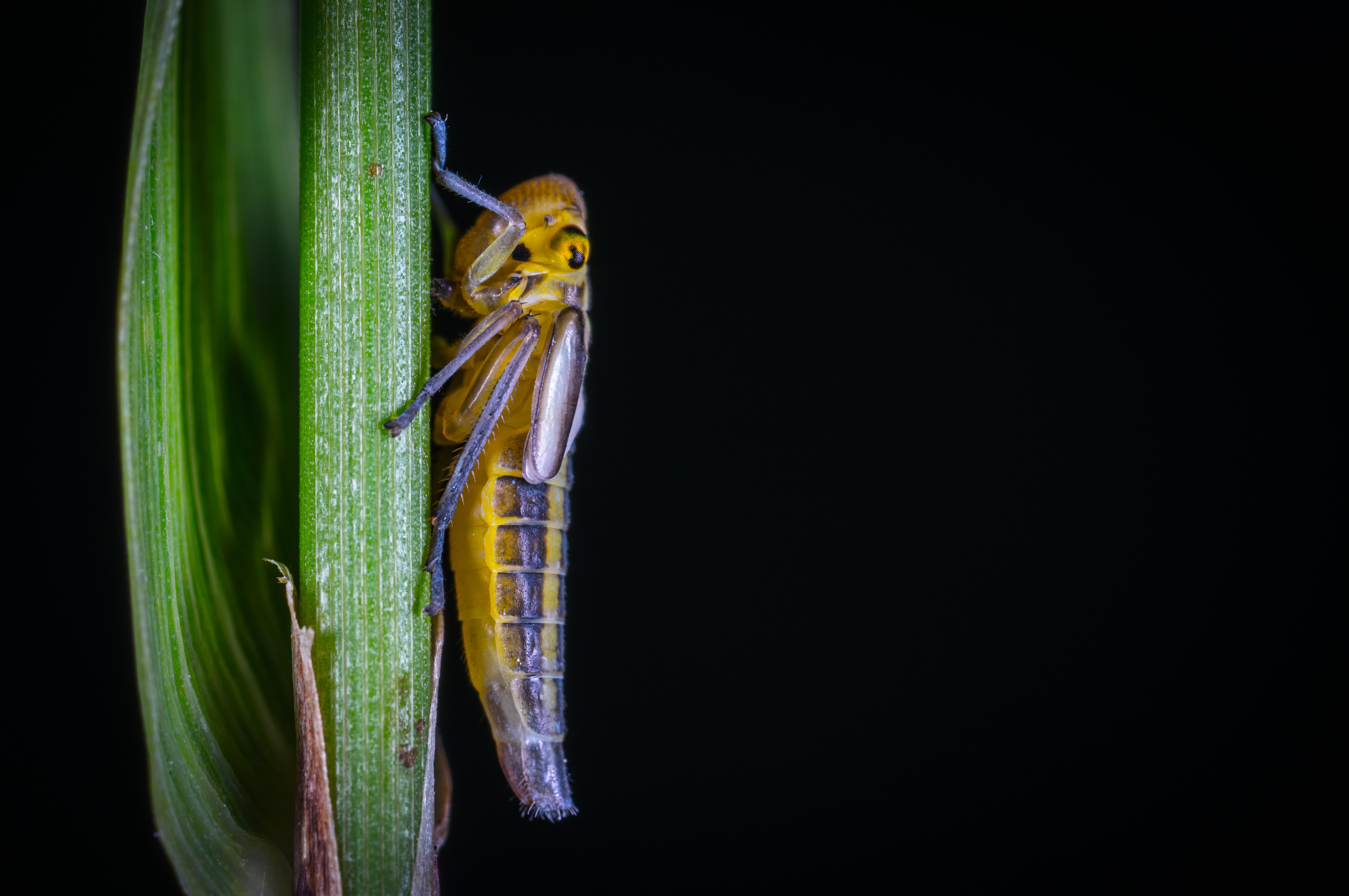 shallow focus photography of brown insect