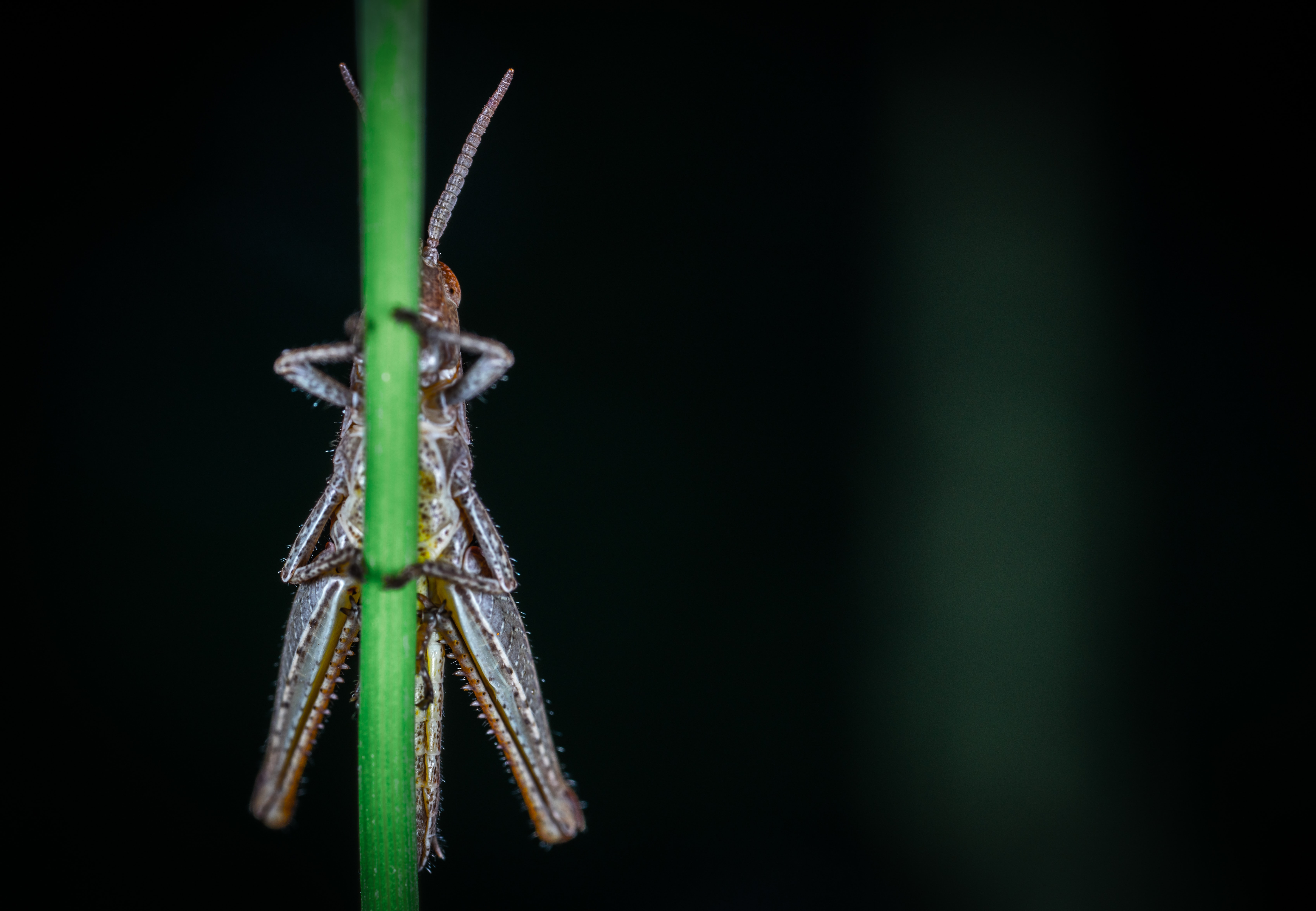 macro photography of gray insect on green plant