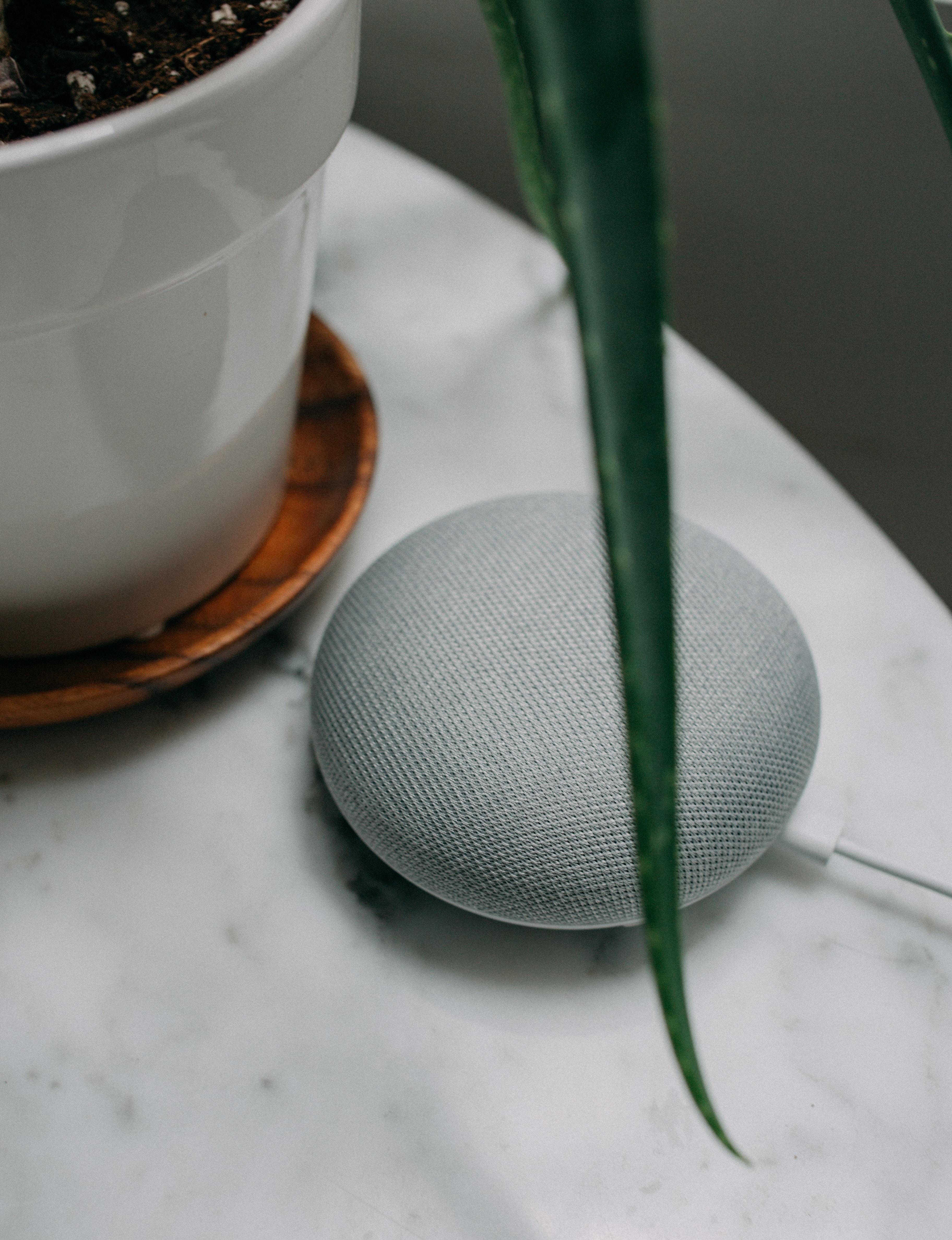 chalk Google Home Mini speaker near plant pot on white surface