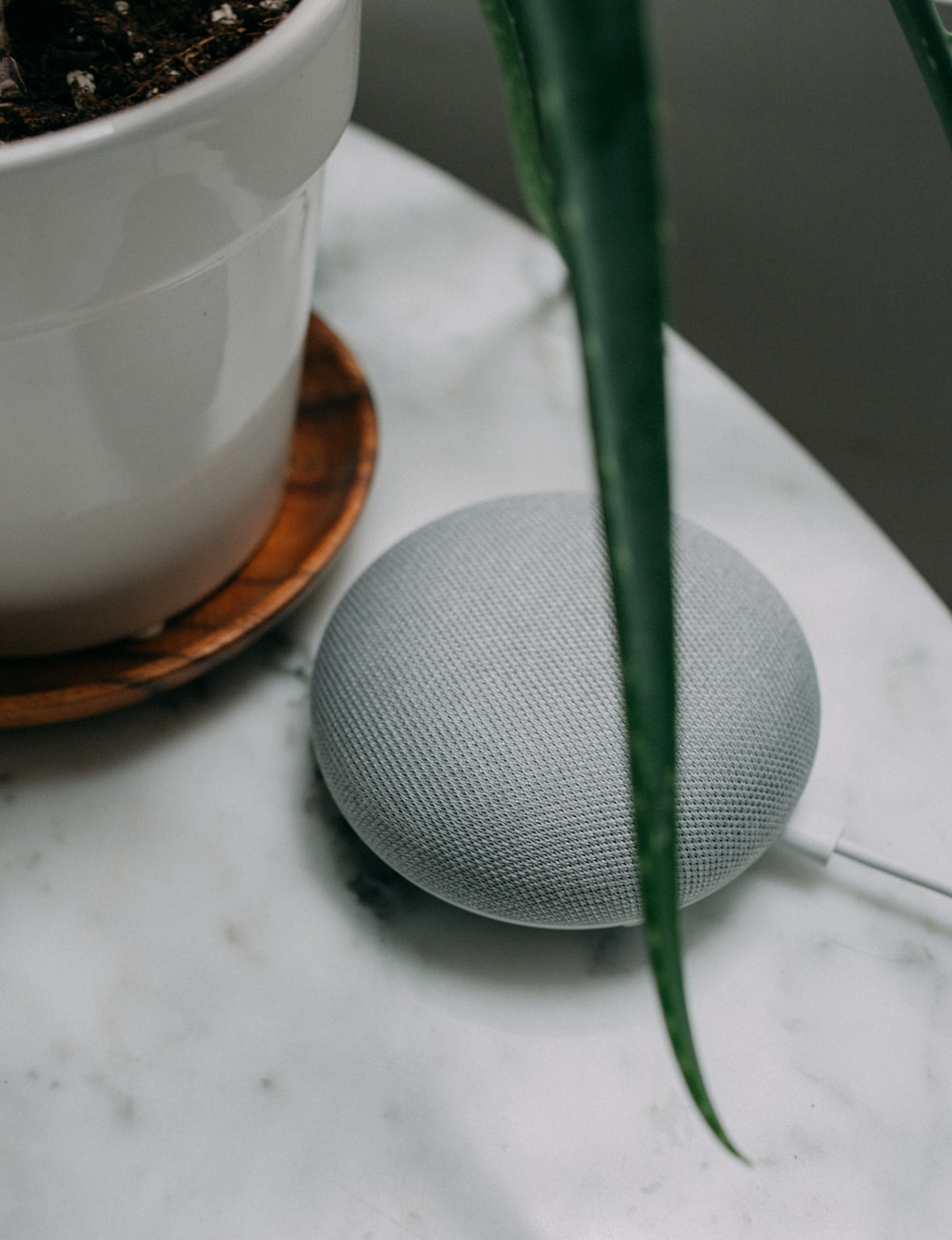 chalk Google Home Mini speaker near plant pot on white surface
