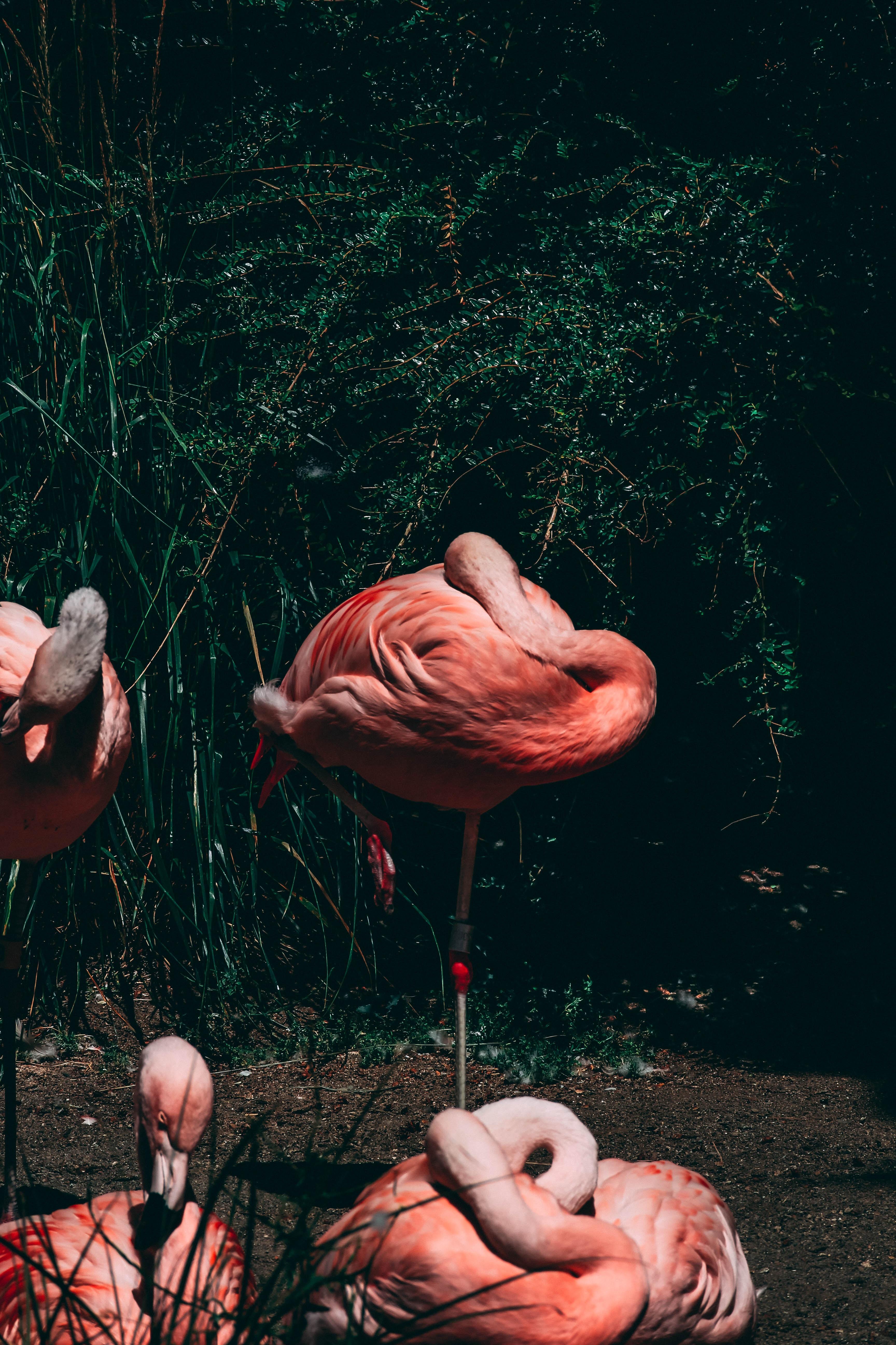 four flamingos near plants