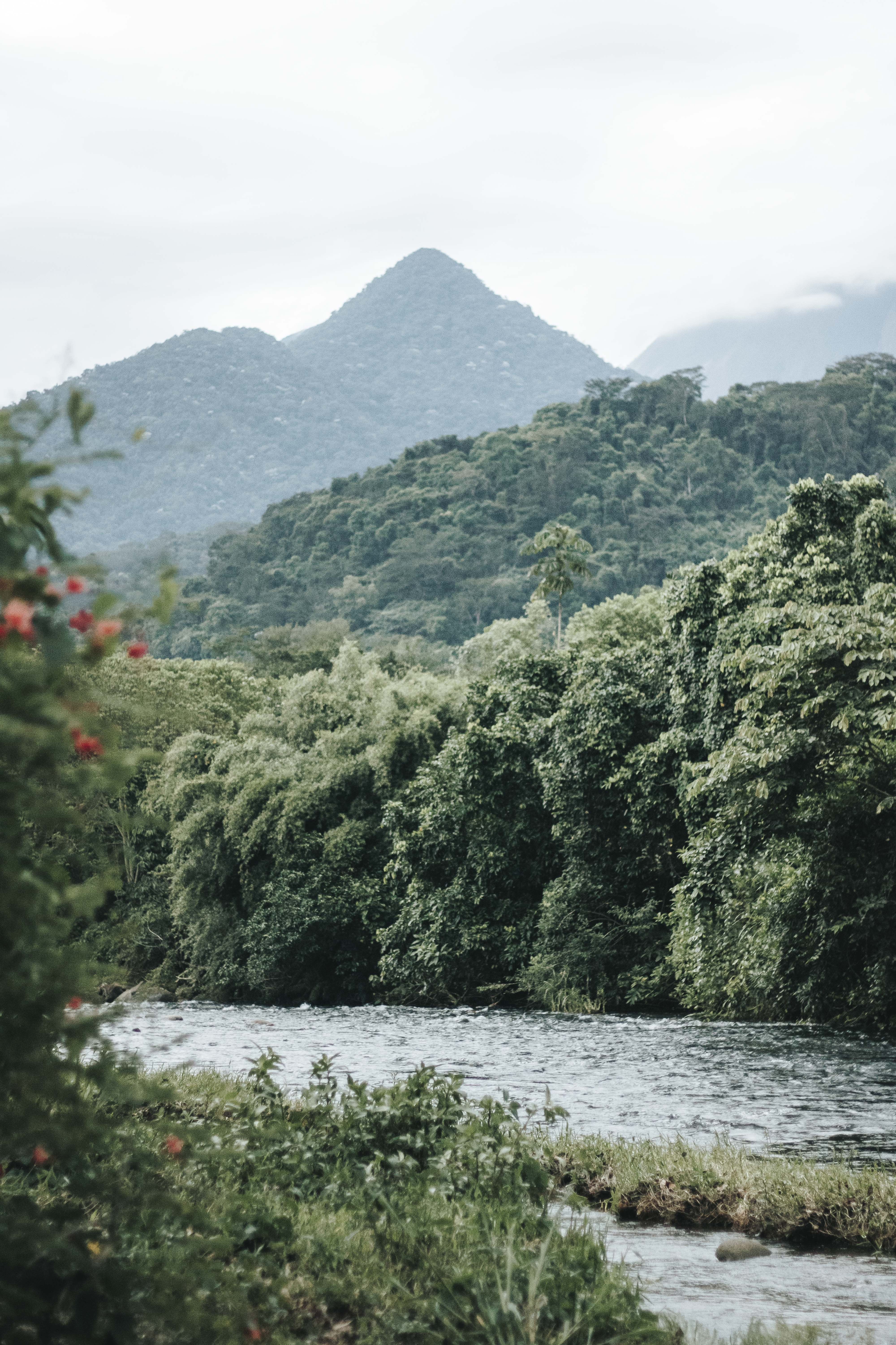 green trees in river at daytime