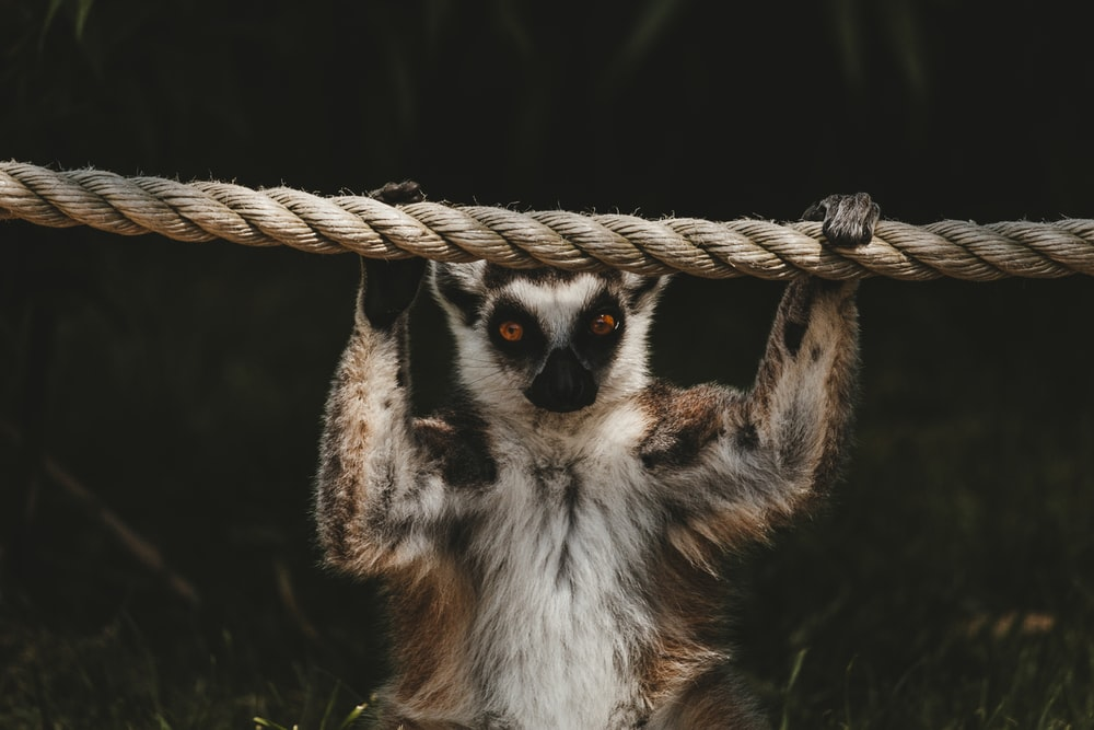animal holding rope