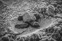 selective focus photography of young turtle on sand