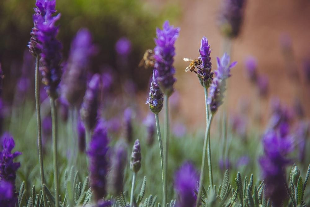 macro shot photography of purple flowers