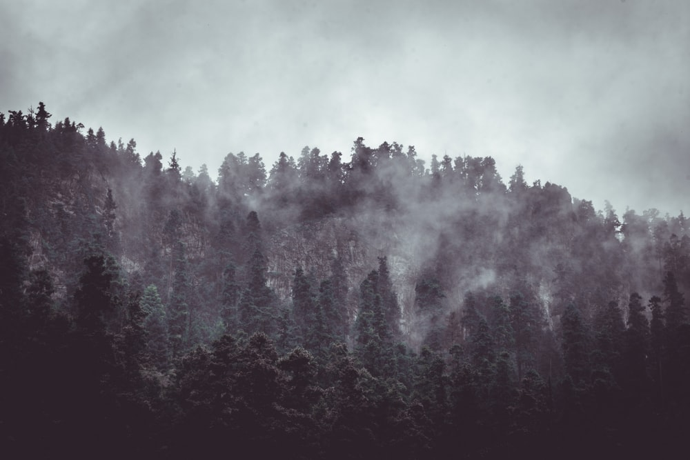 forest surrounded by fogs