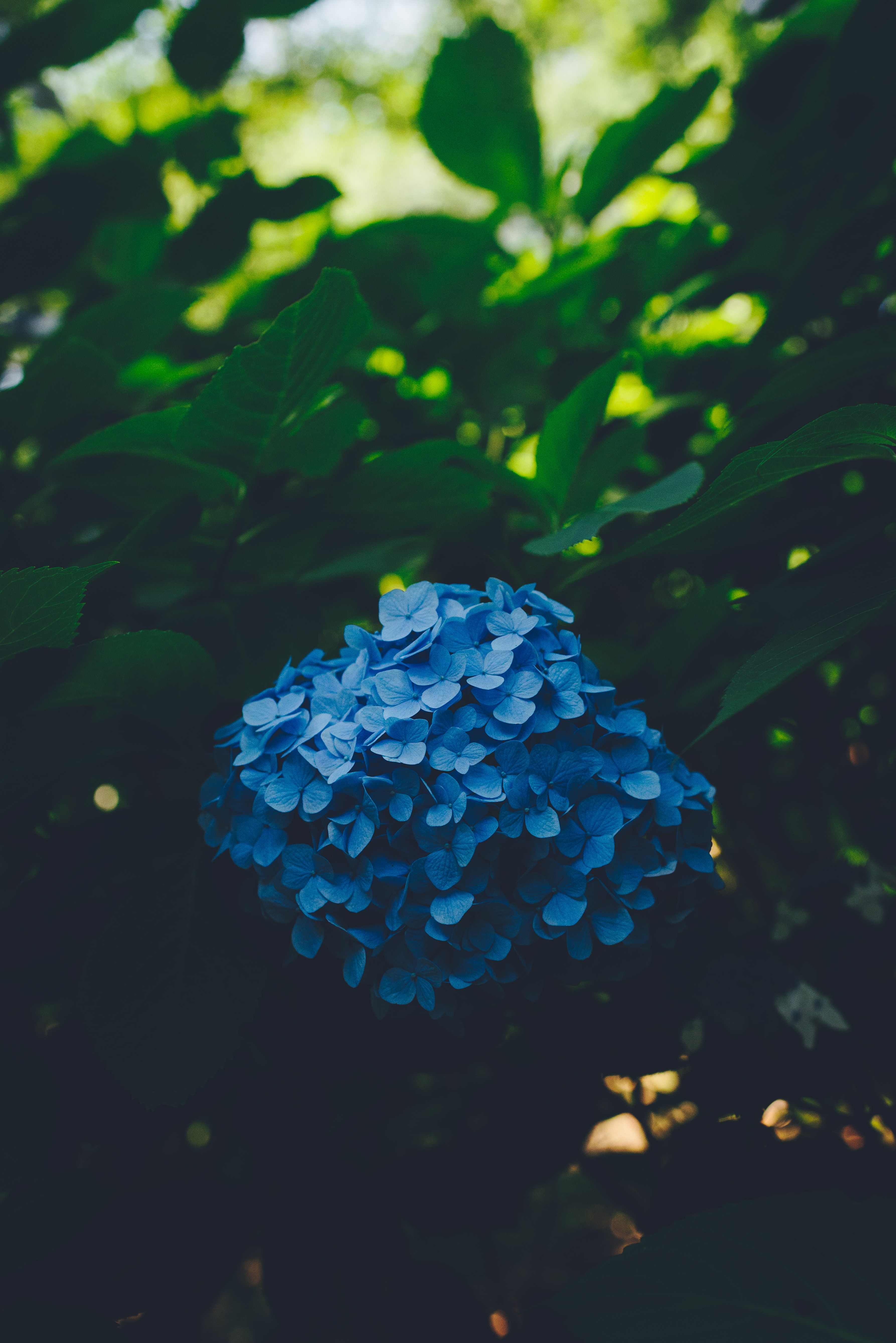 blue flowers surrounded of leafs