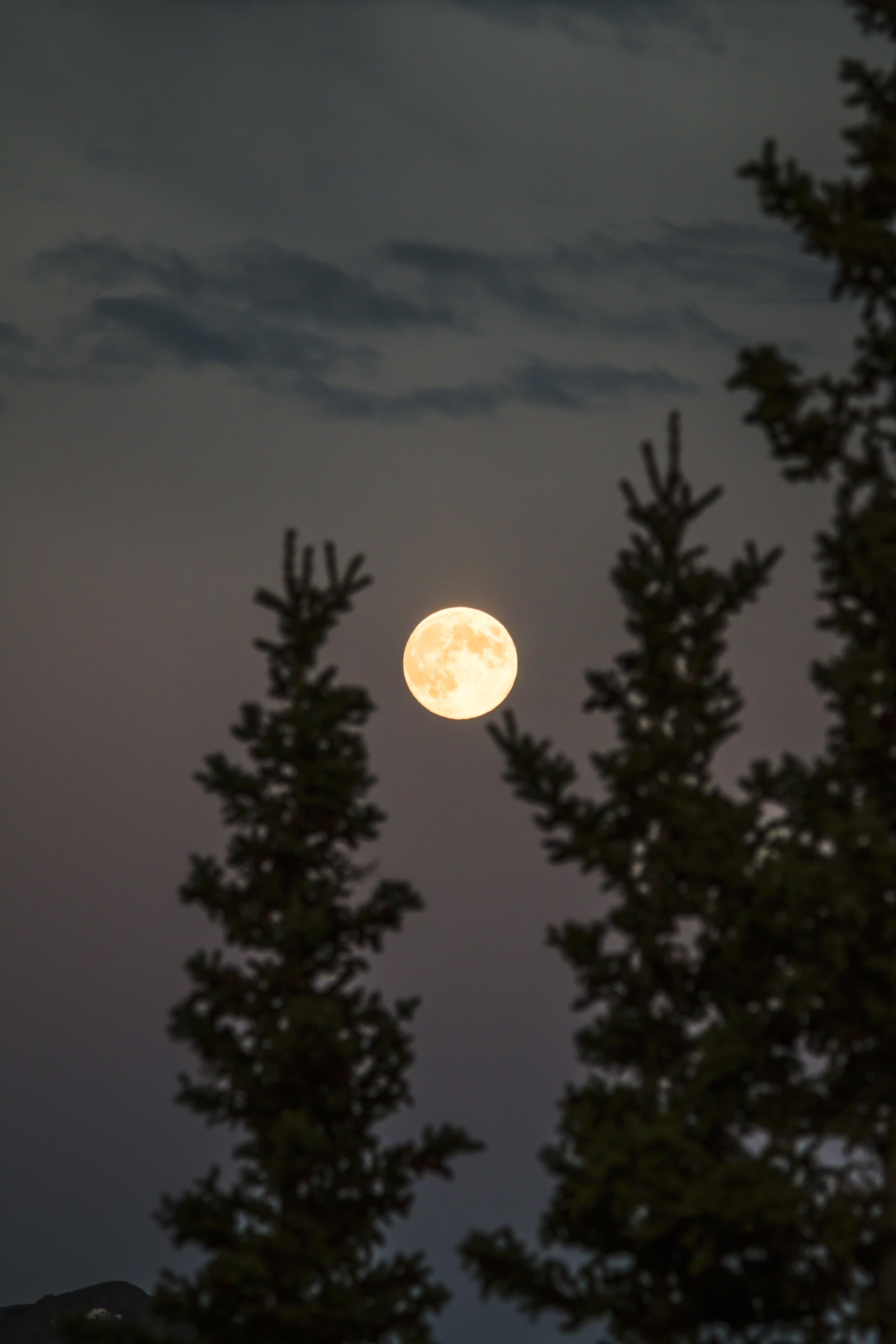 Summer Moon dark and light stories