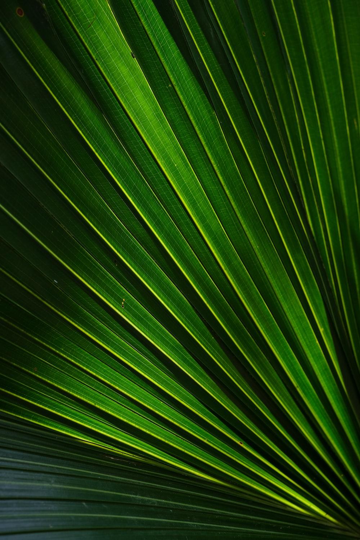 green leafed plant art