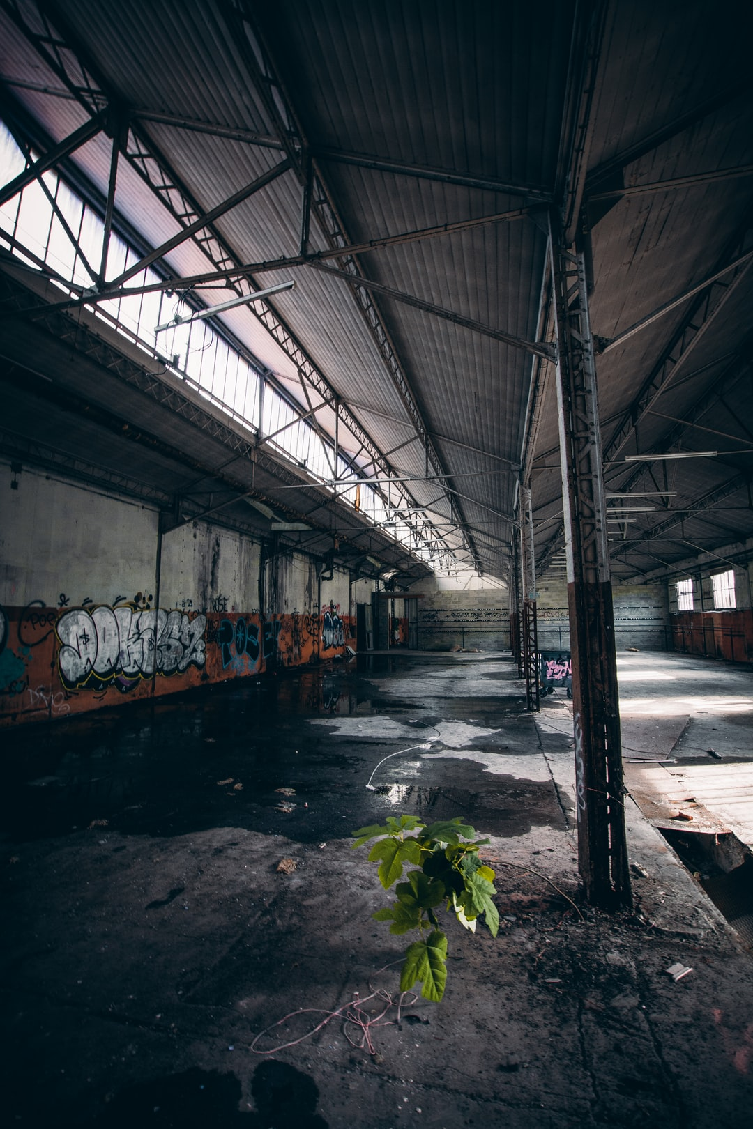 I really love this plant in this old factory