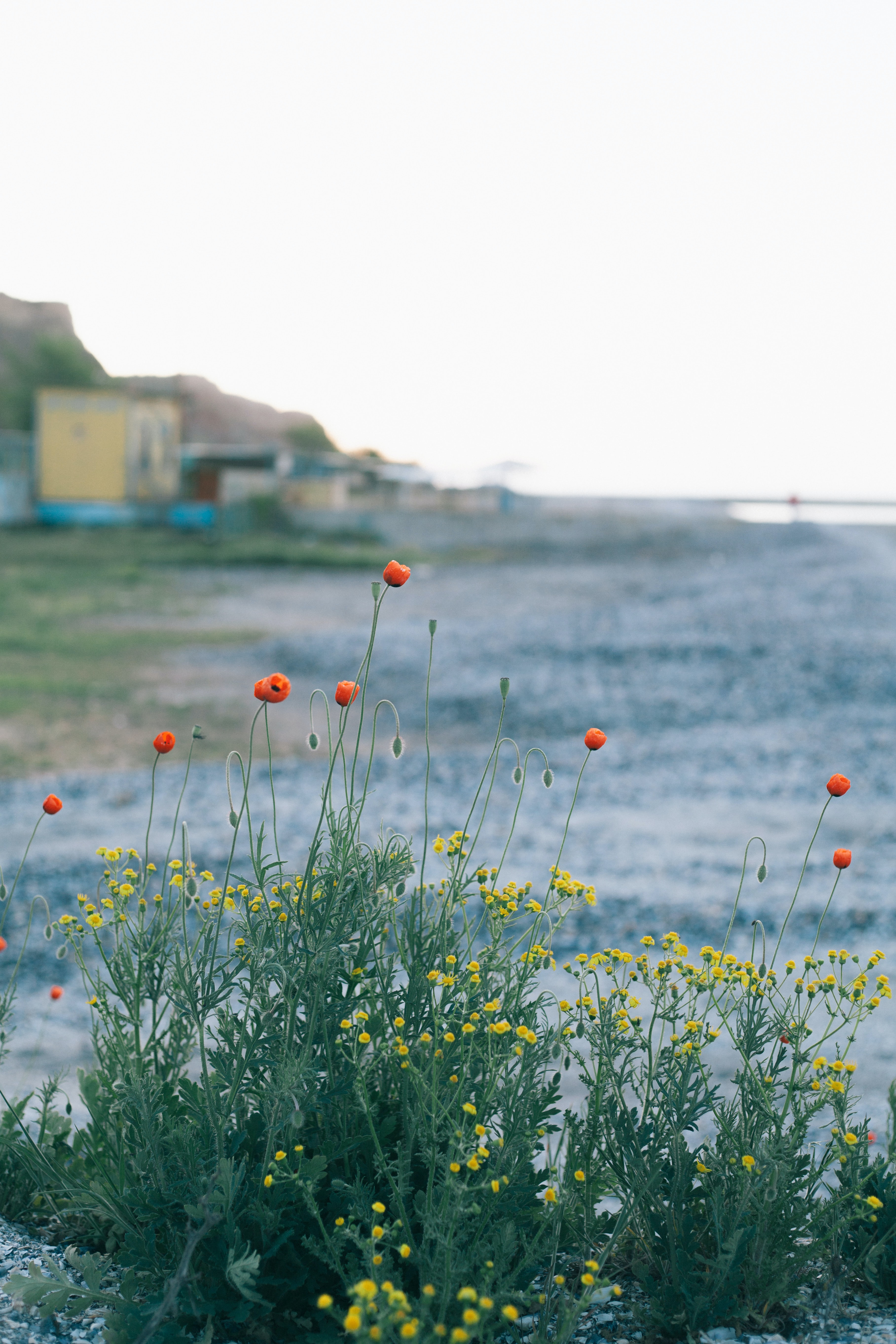 orange and yellow petaled flowers near sea at daytime