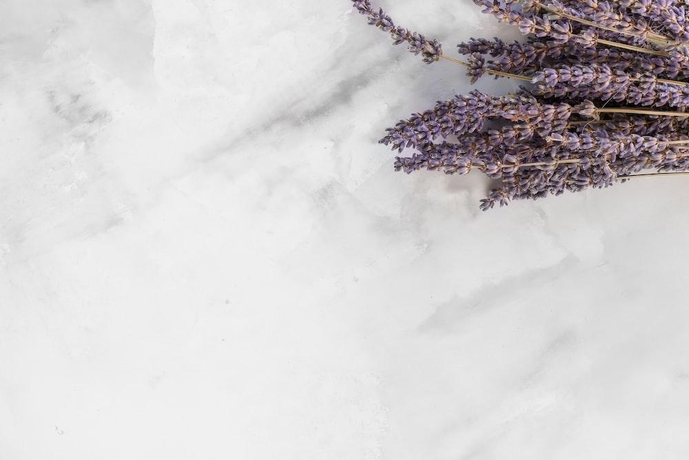 lavender flower on white surface