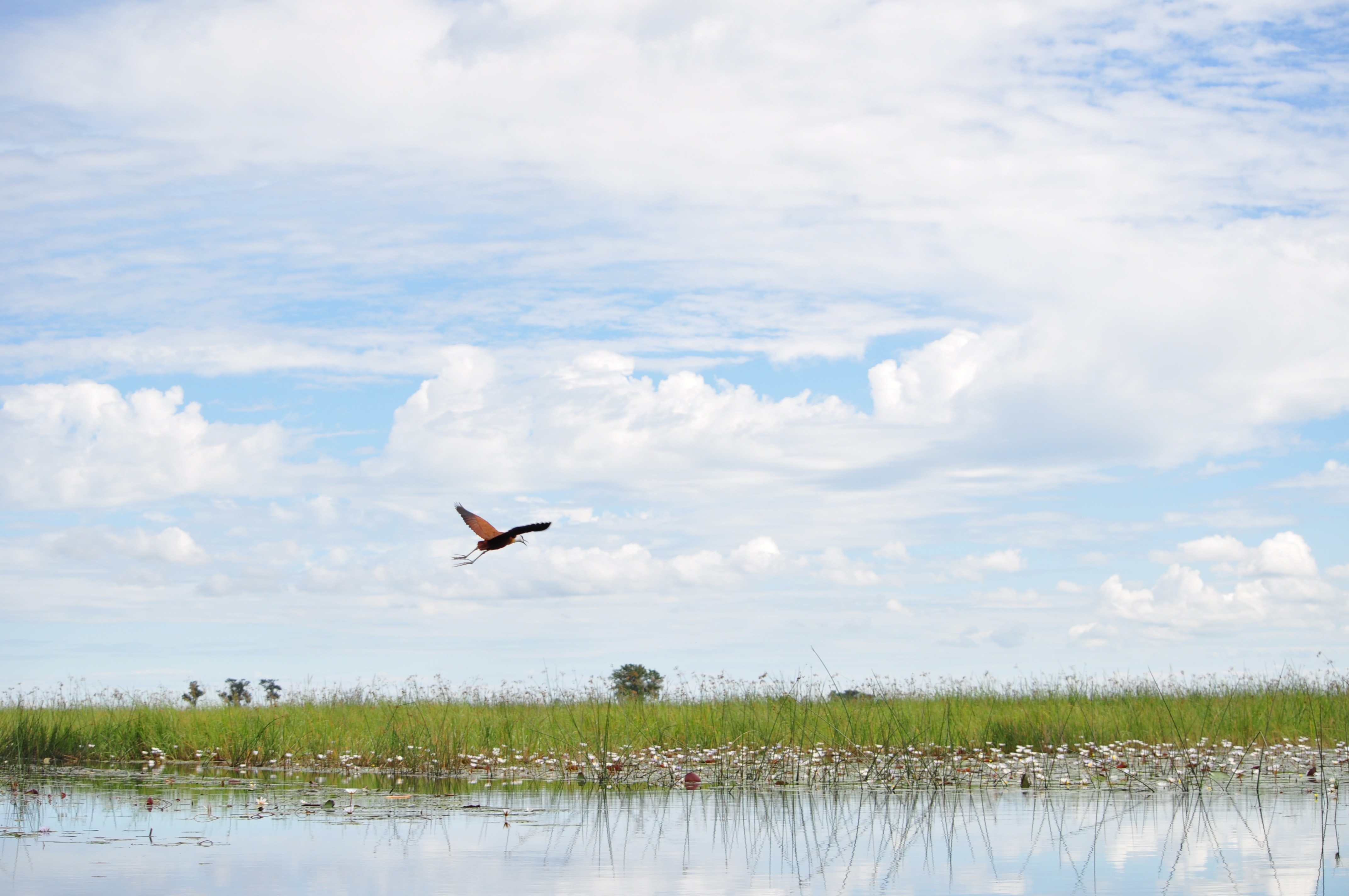 red and black bird on flight above body of water