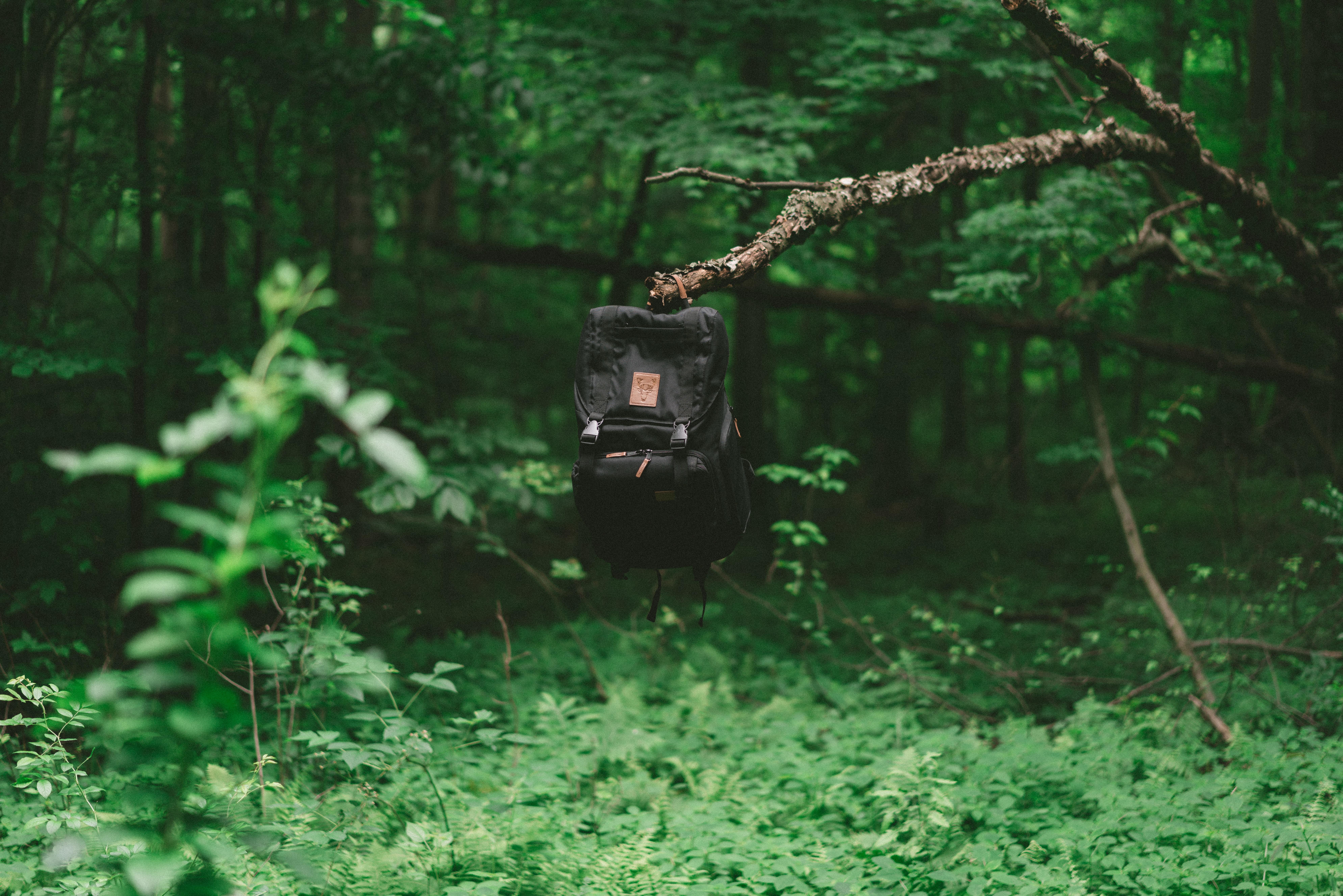 black knapsack on tree branch