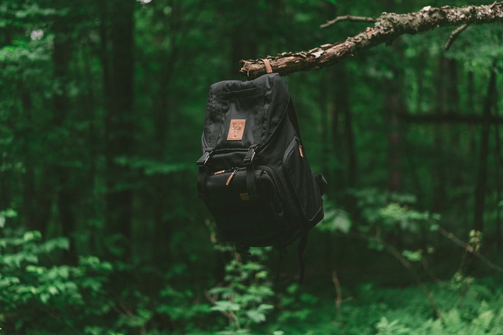black backpack on tree branch