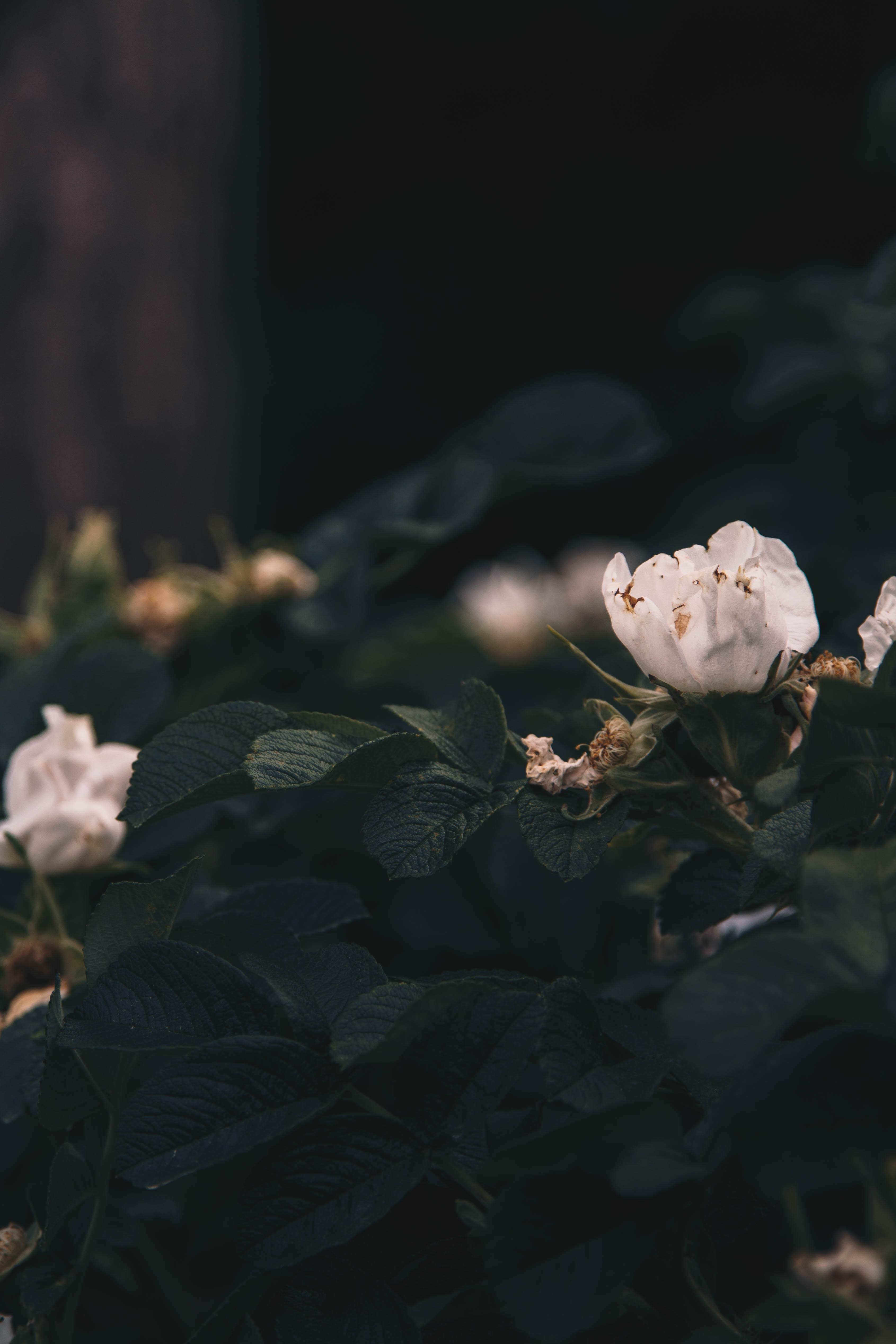 macro photography of white petaled flowers
