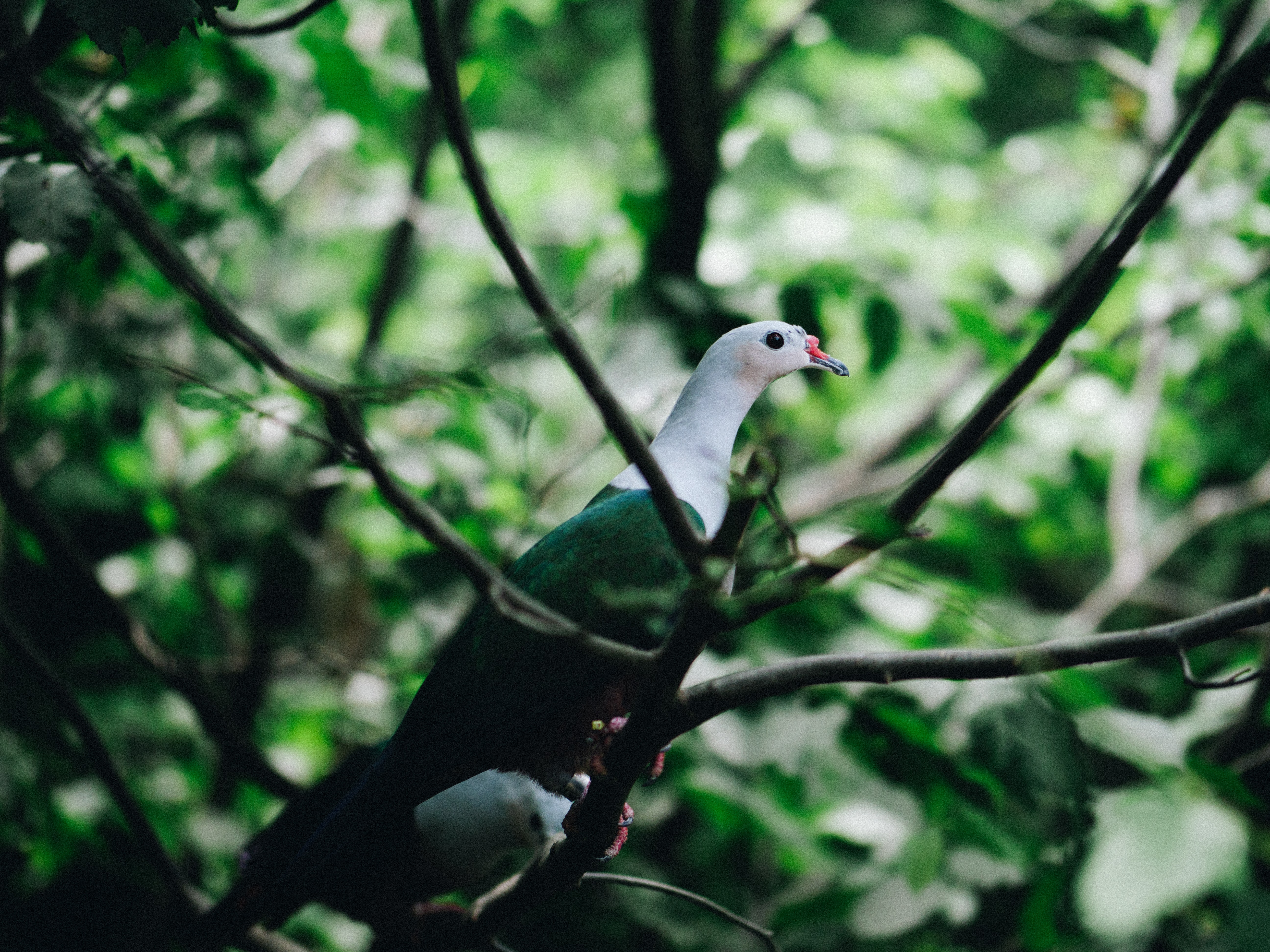 green and white bird perching on tree branch during daytime