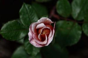 3931. Virágok