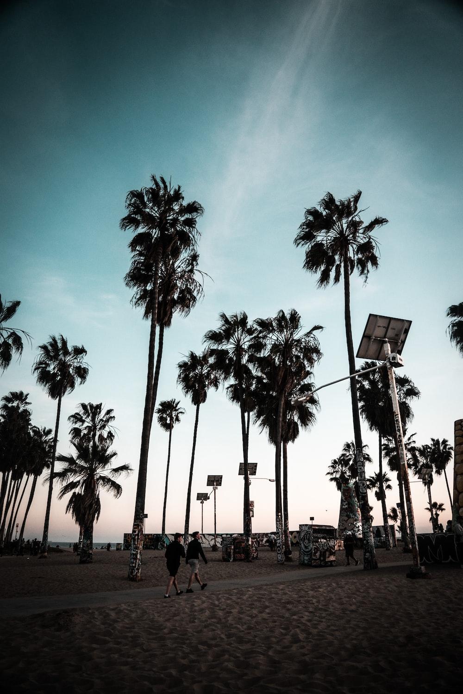 people walking on street post near palm tree