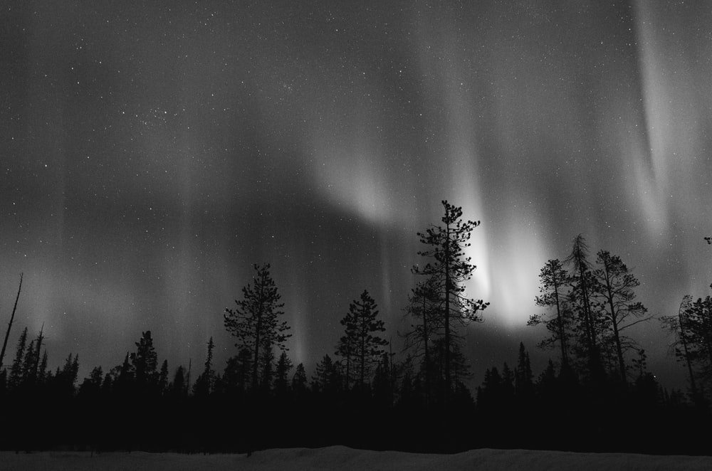 grayscale photo of trees above aurora borealis