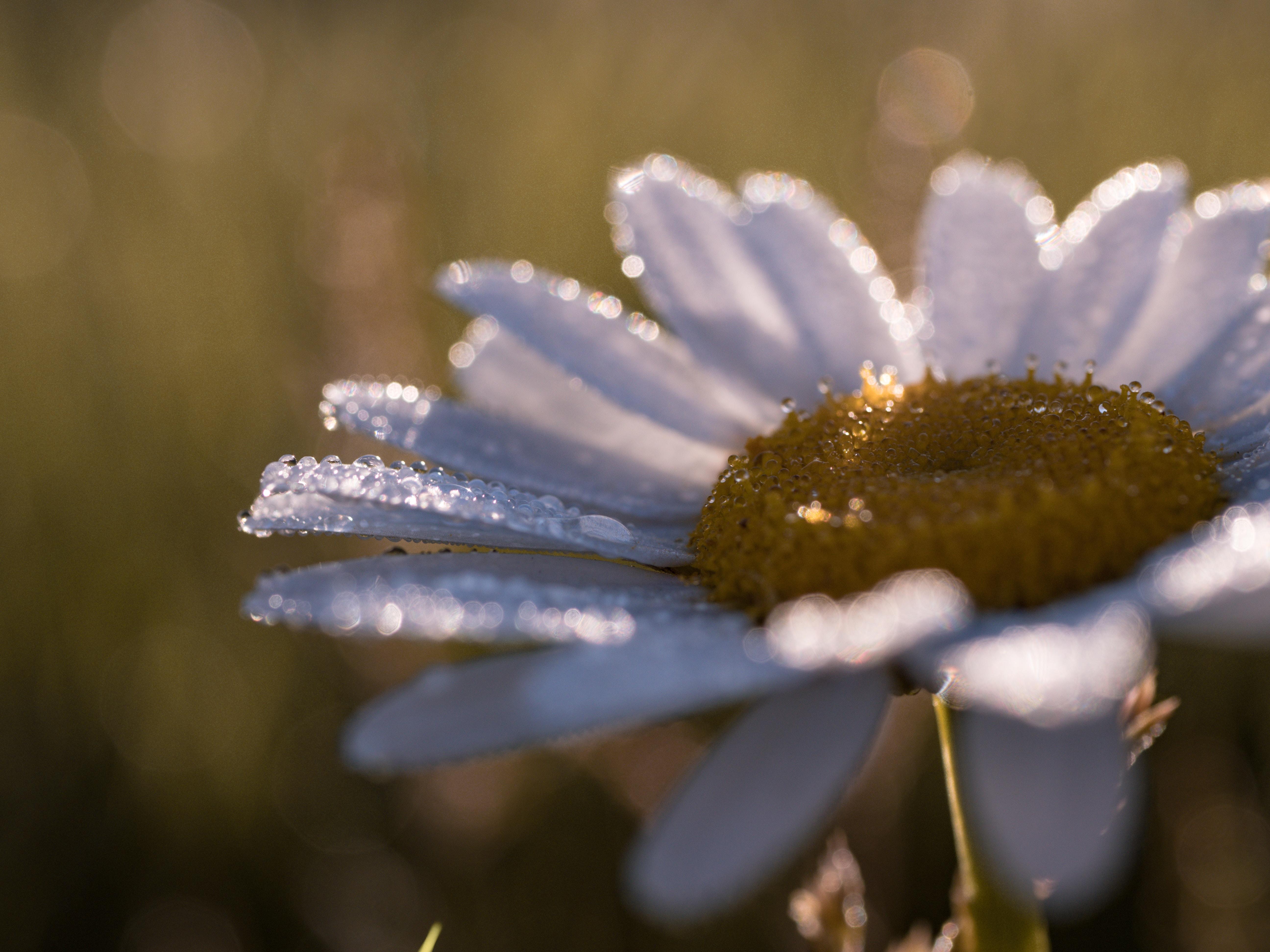 close-up photo of daisy flower