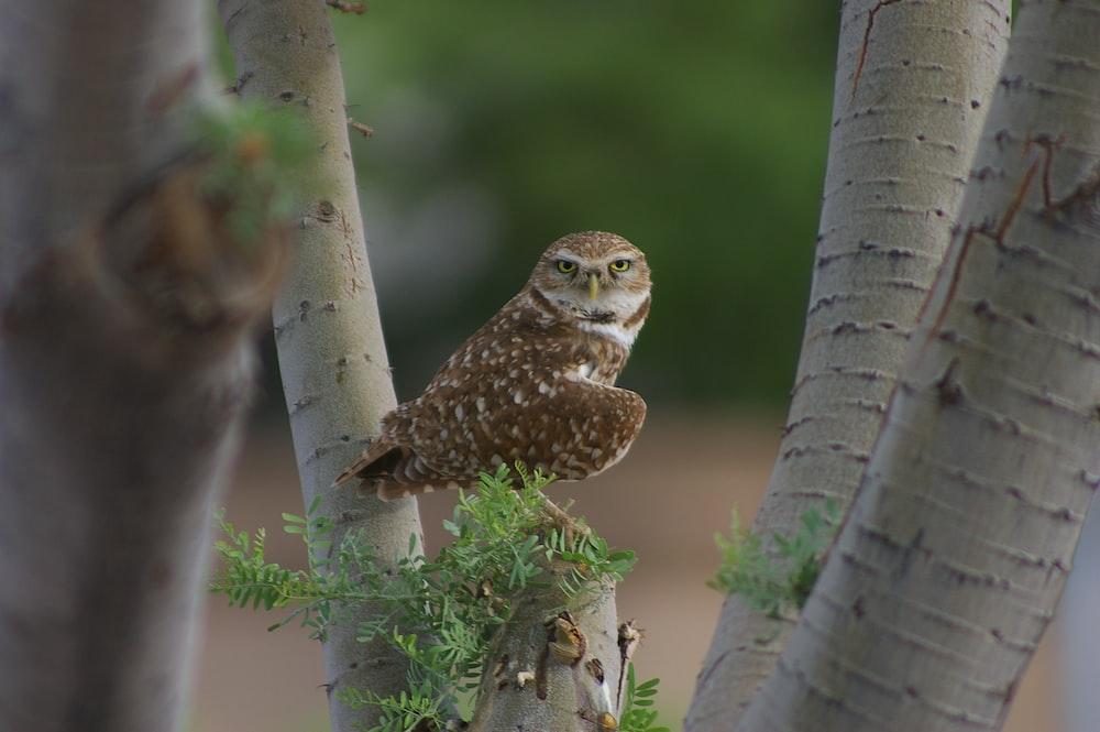 owl leaning sideway perching on twig