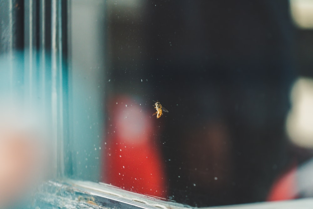 yellow insect on clear glass board