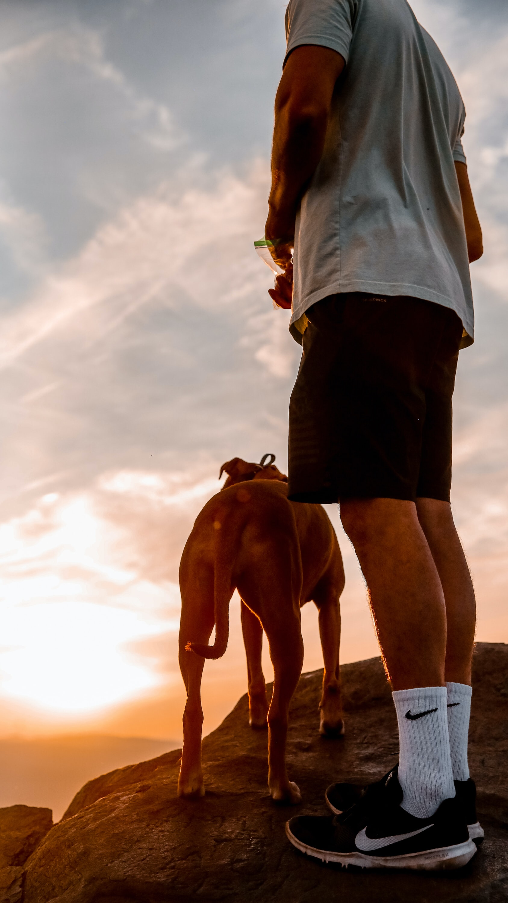 man standing near brown dog at golden hour