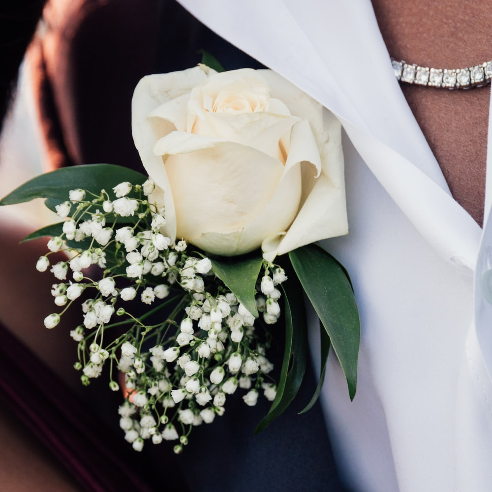 white rose closeup photography