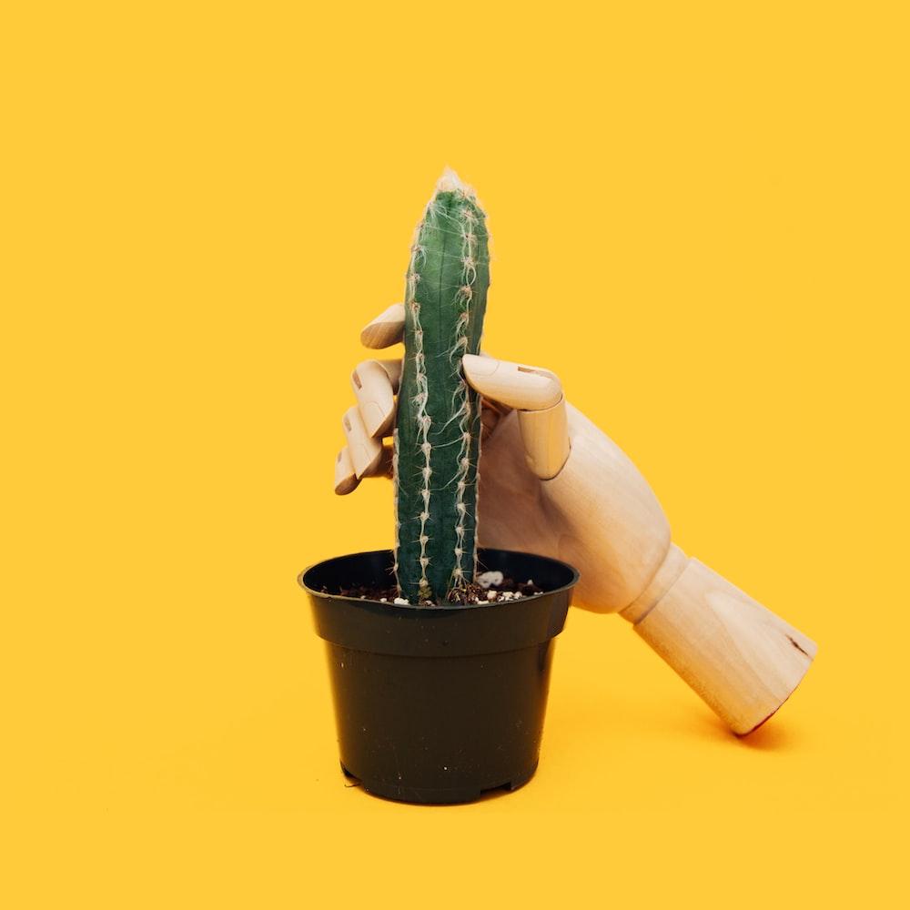 green cactus on black pot