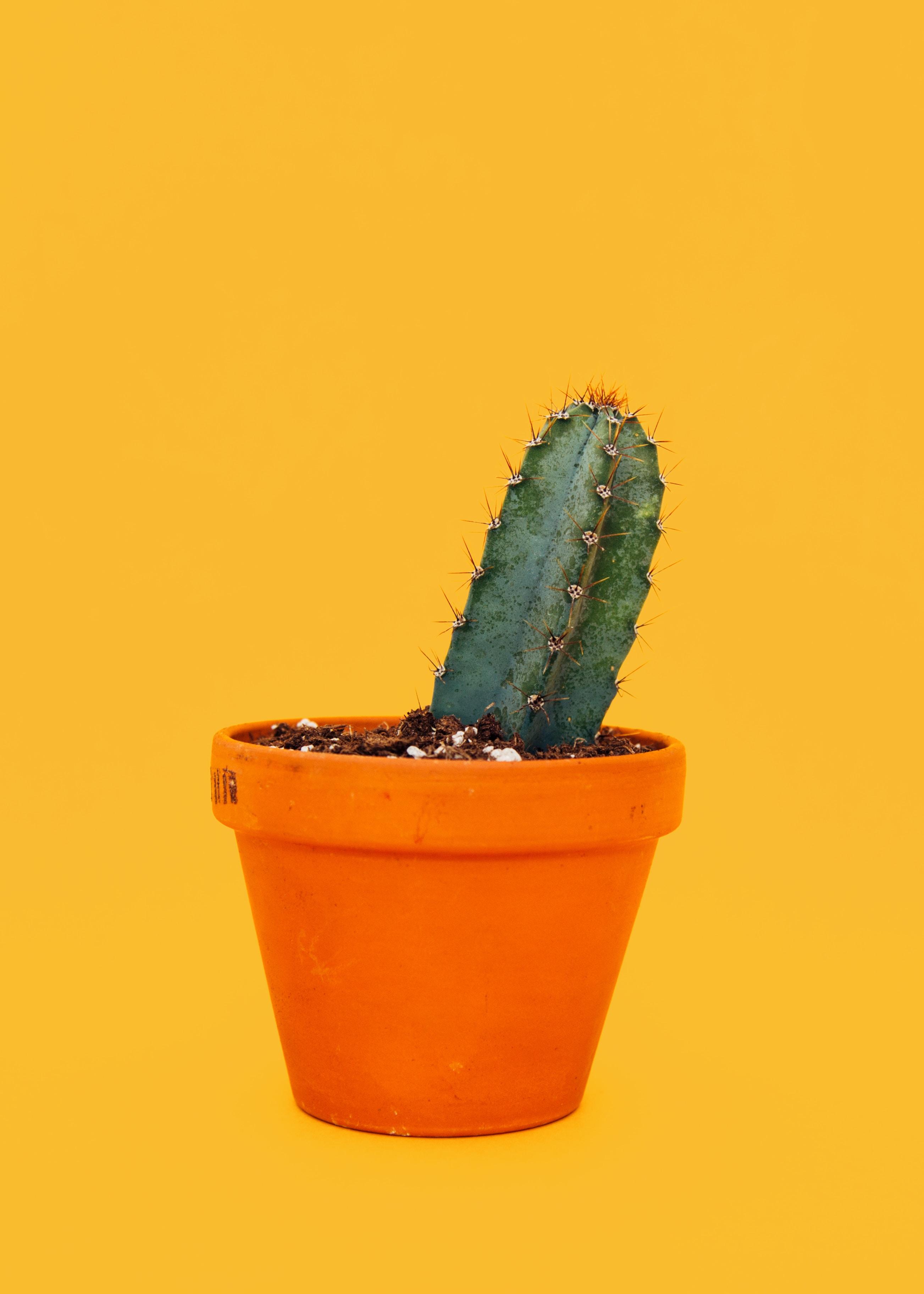 green cactus on orange pot
