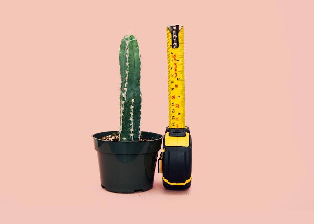 green cactus in back pot beside tape measure