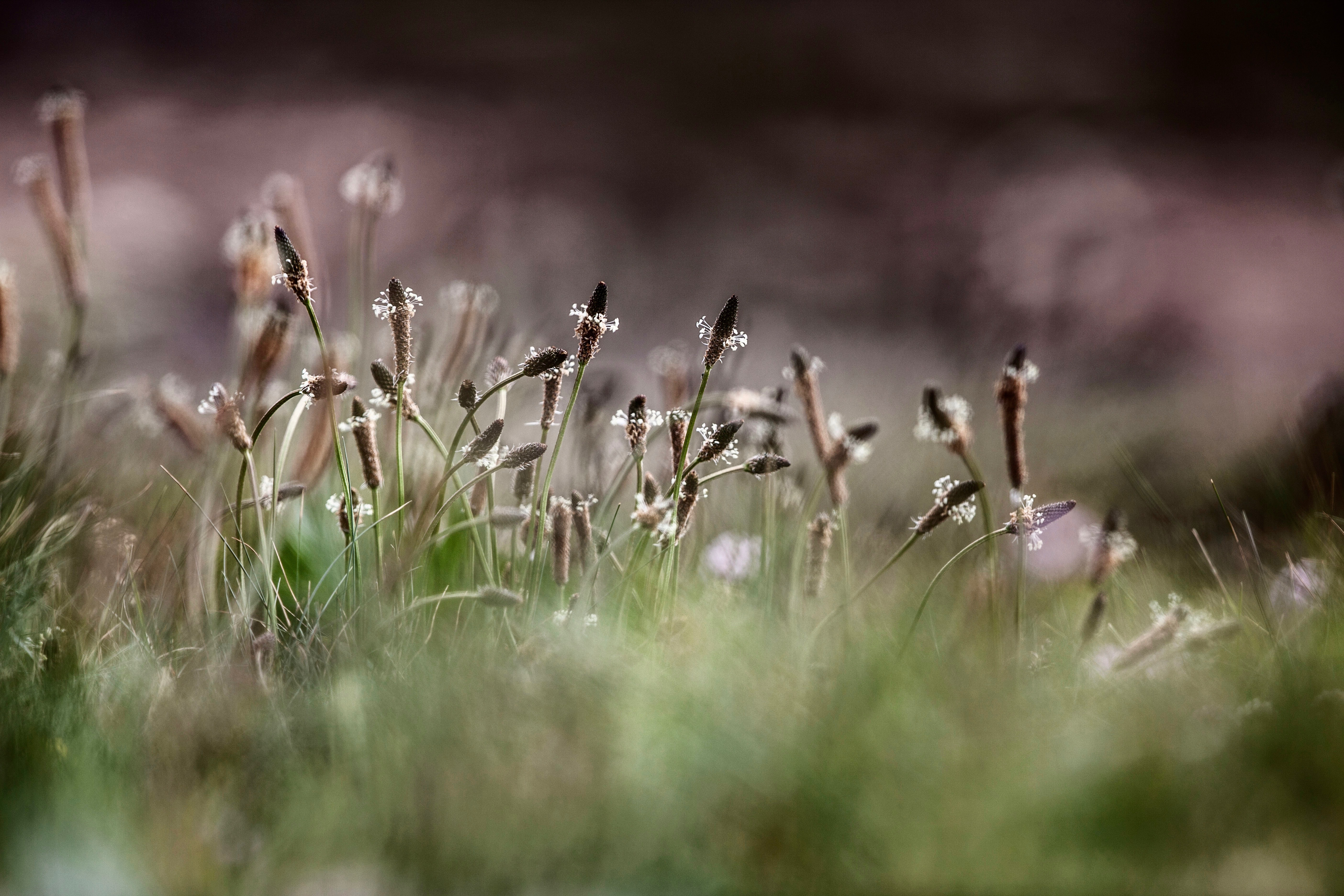 selective focus photography of brown petaled flowers