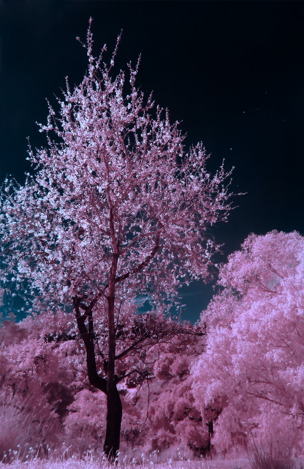 pink and brown cherry blossom tree during nighttime