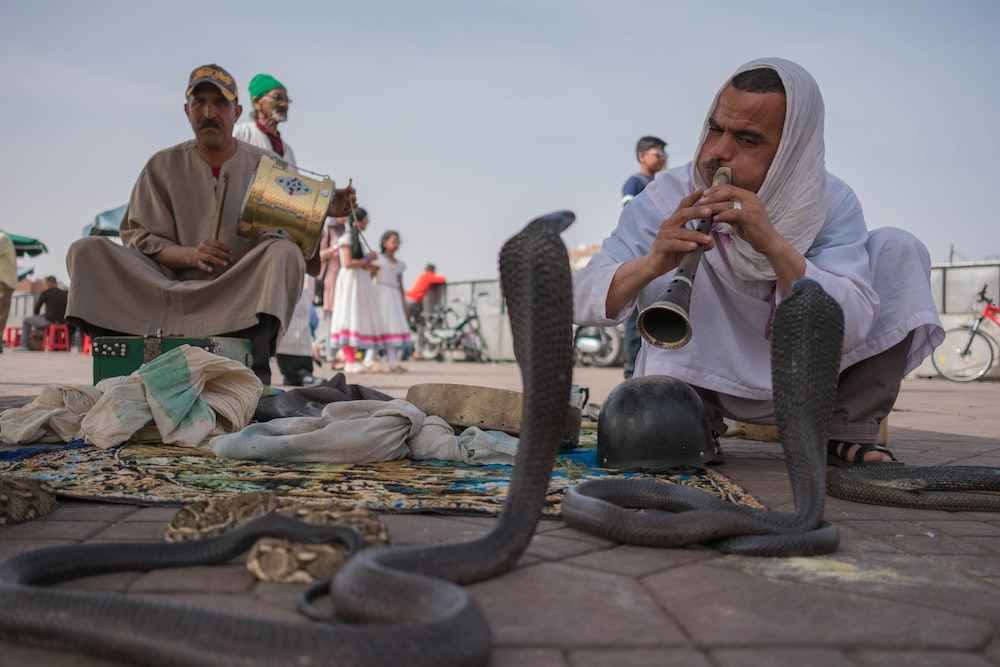man playing flute in front cobras