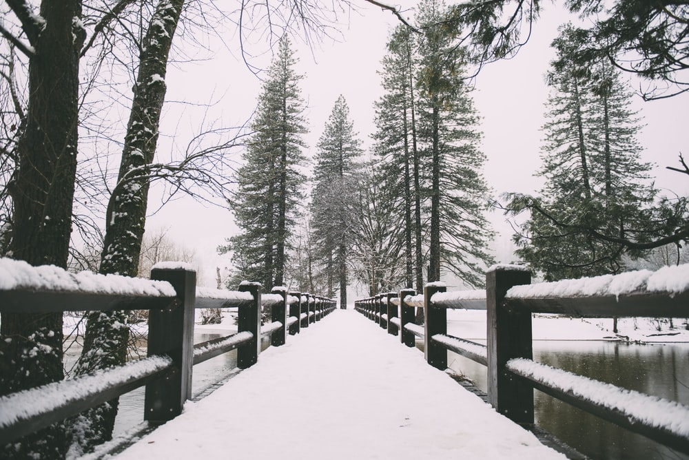 brown wooden pathway with white snow during daytime