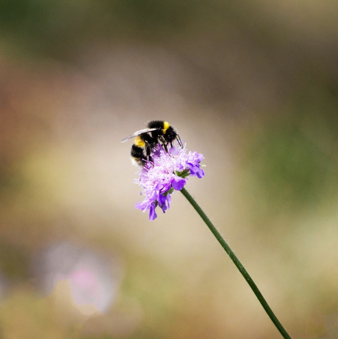 I adore bumblebees, and showing them doing what they do best, pollinating, is a joy.