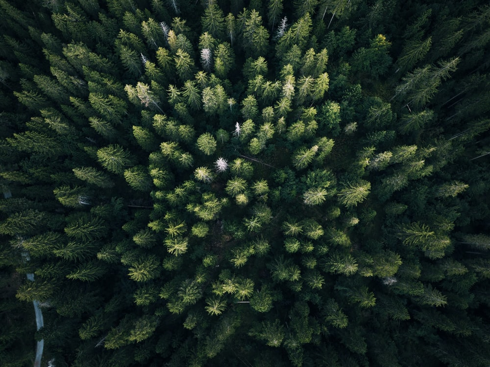 aerial photography of green leaf trees