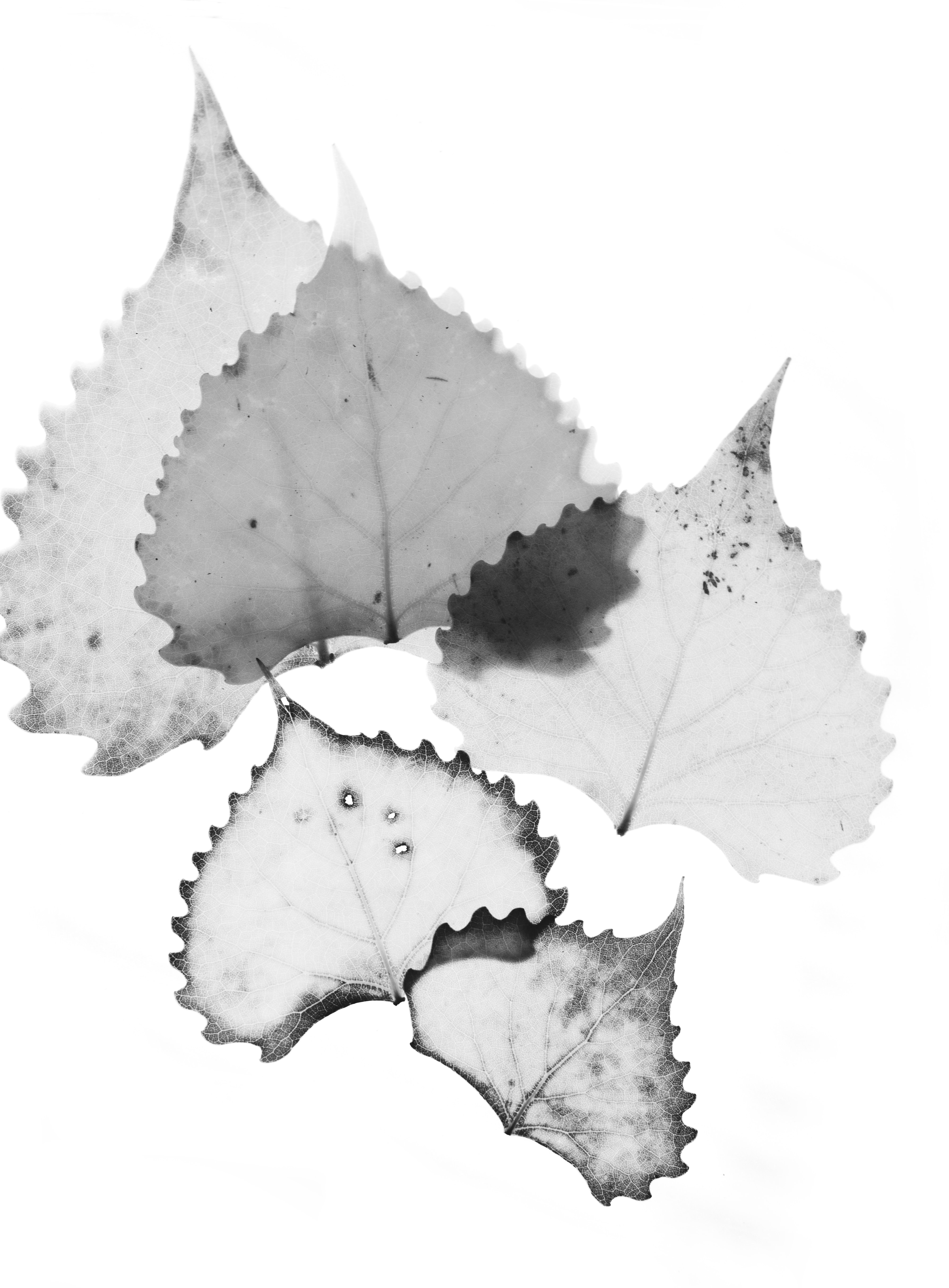 white leaves art with white background