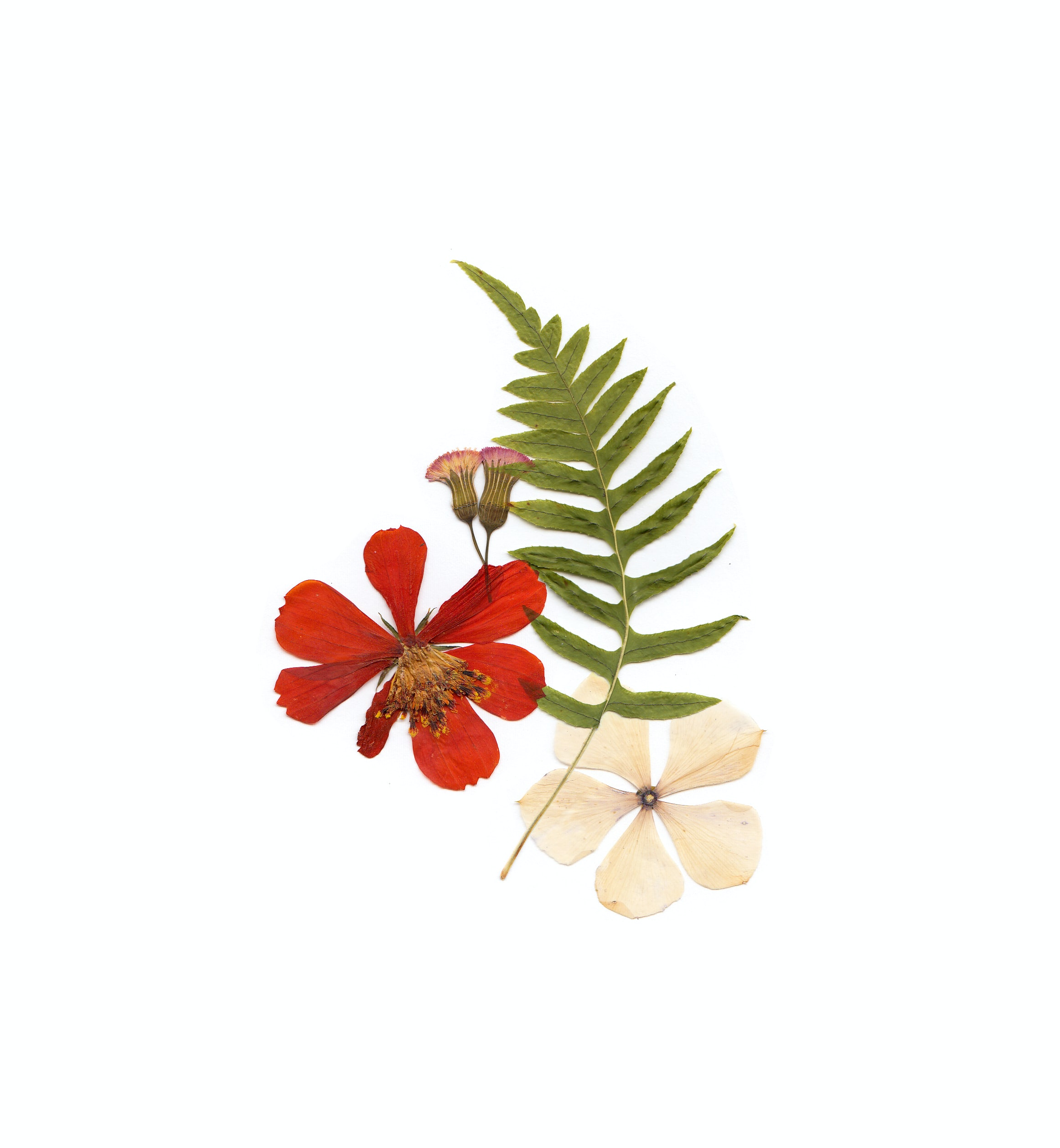 green fern, white flower, and red flower on white surface