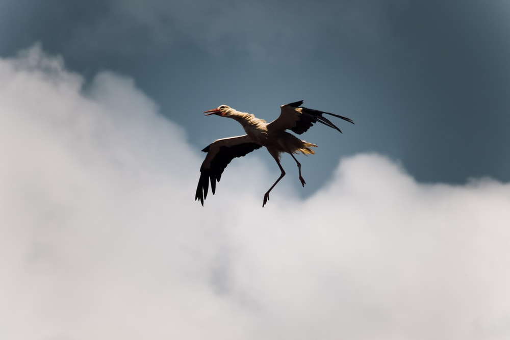 white and black bird on flight near white