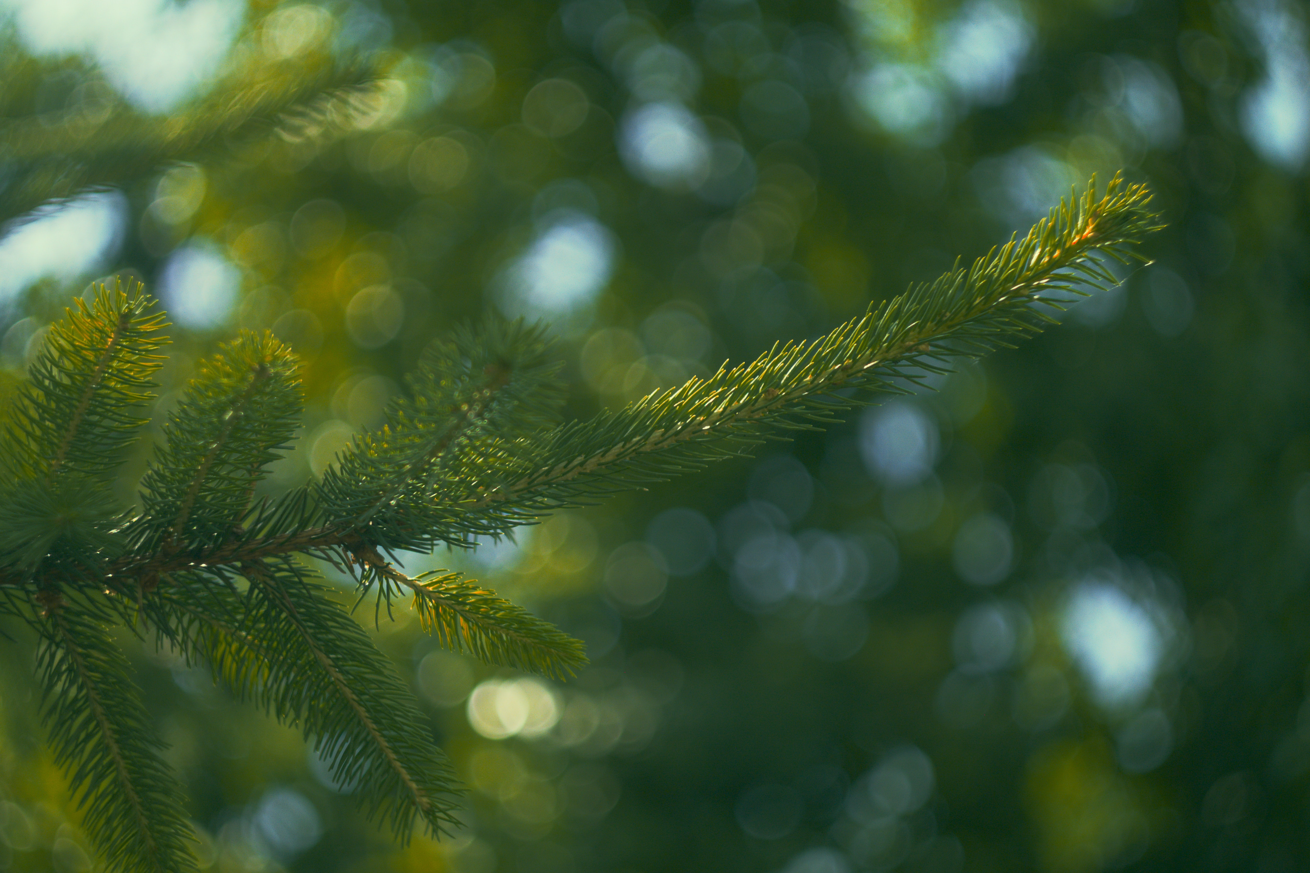 focus photography of green tree