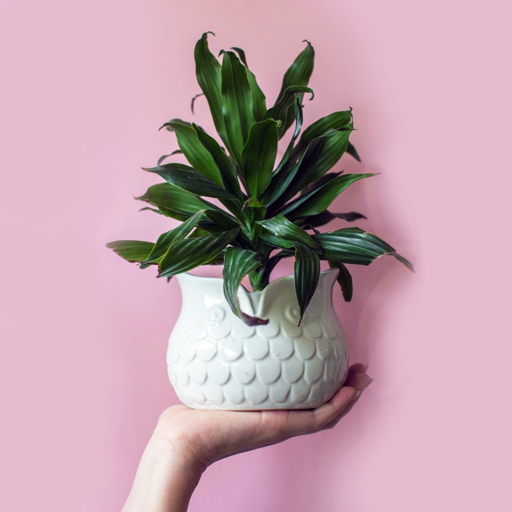 person holding plant vase with plant