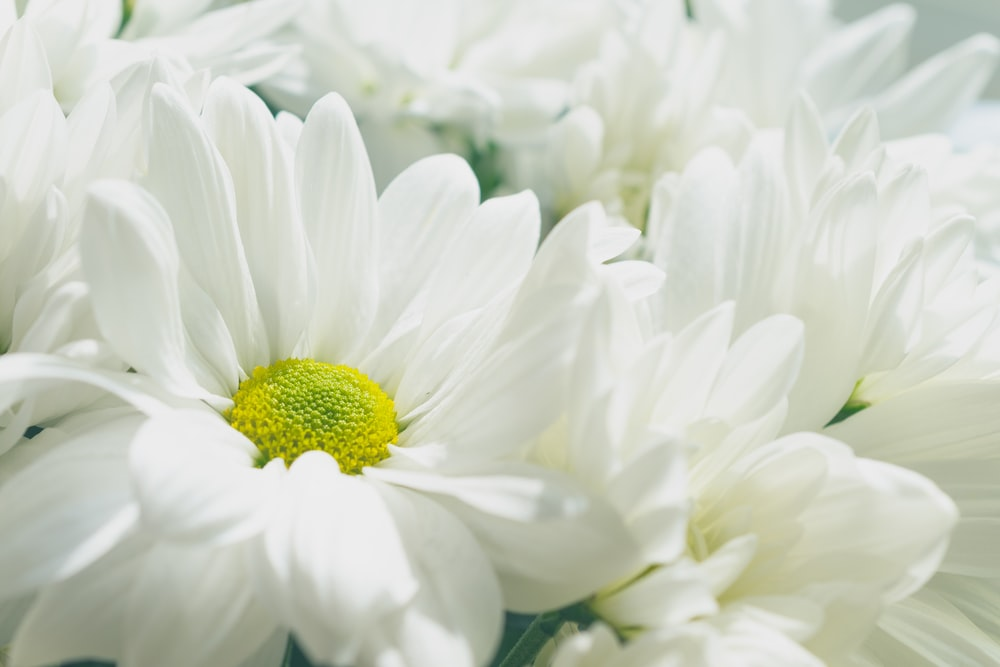 White flowers pictures download free images on unsplash white petaled flowers mightylinksfo
