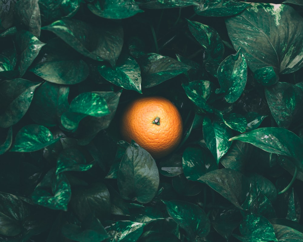 focused photo of orange fruit