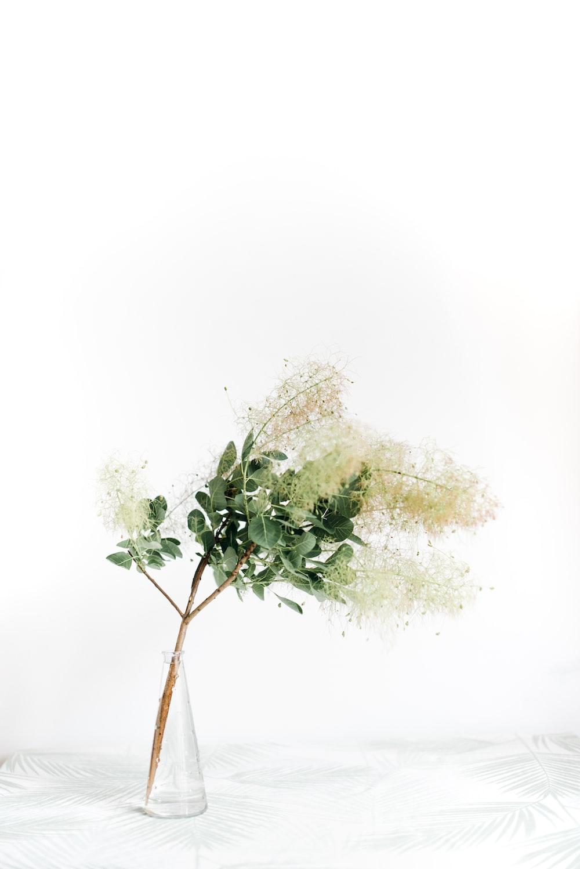 plant on vase