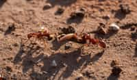 Preparing for Winter  ant stories