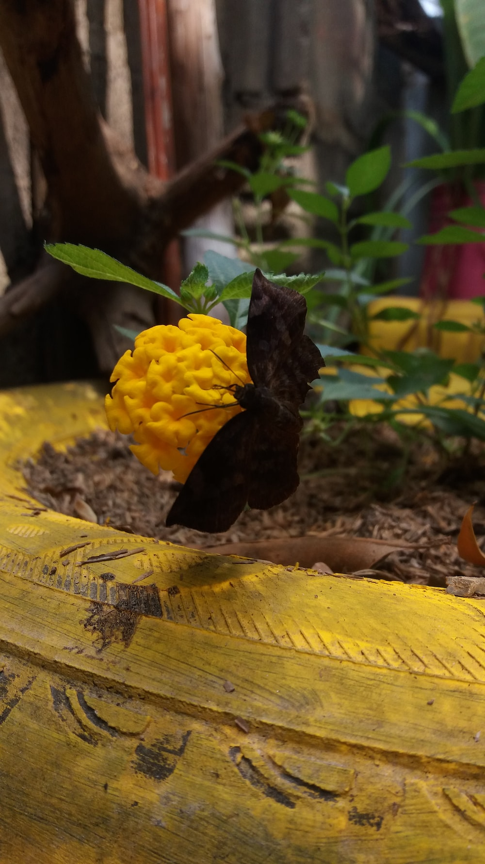Nature, garden, flower and butterfly HD photo by maria paula ...